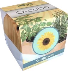 Ocube-sunfl